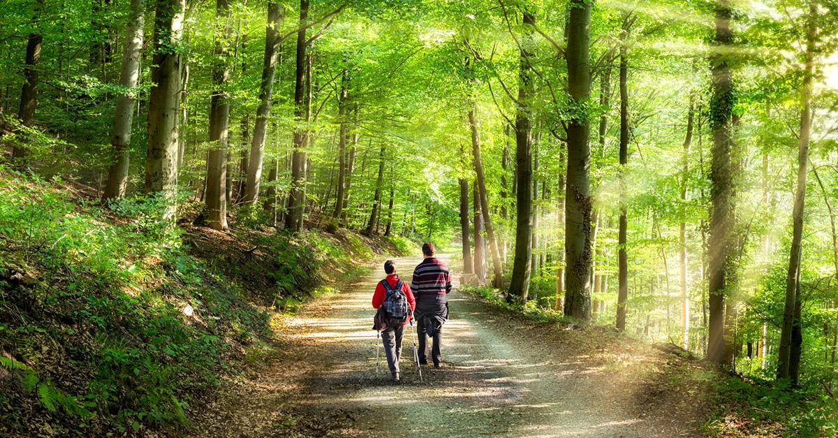 Çilingoz Tabiat Parkı'nda Doğa Yürüyüşlerine Katılın