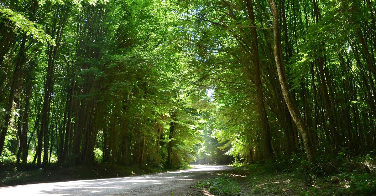 Longoz Ormanları Milli Parkı'nı Gezin