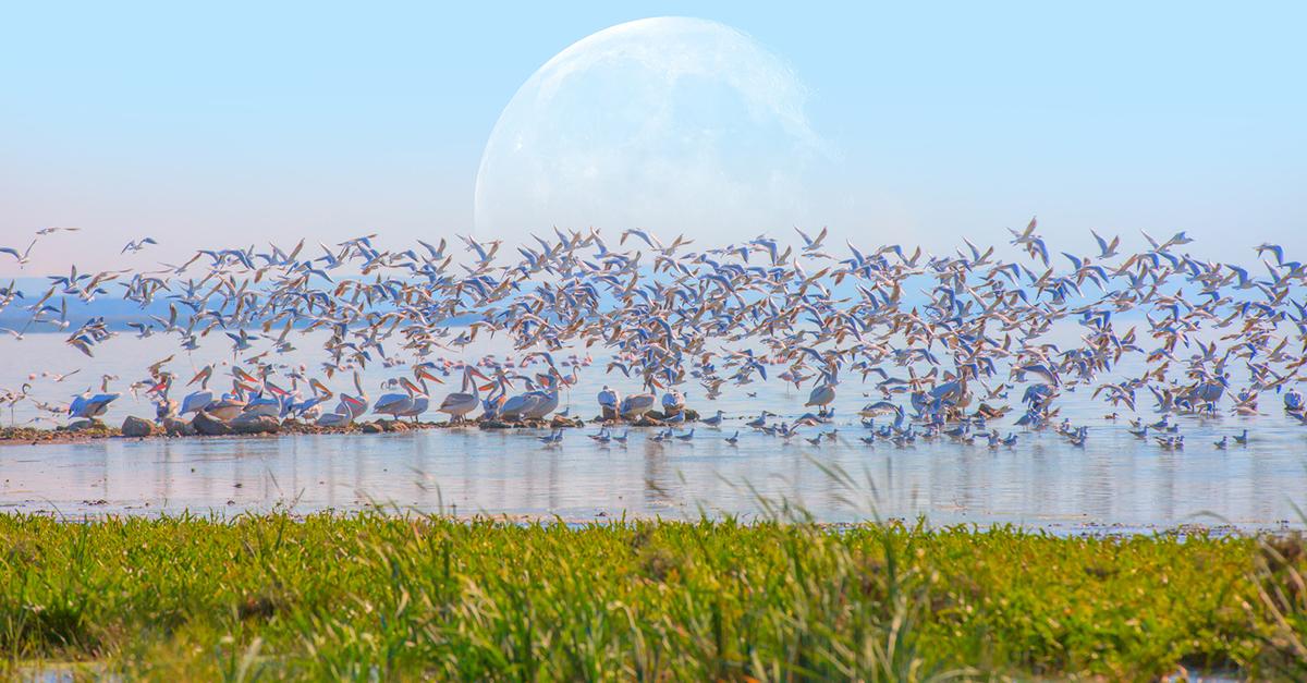Manyas kuş cennetini gezin